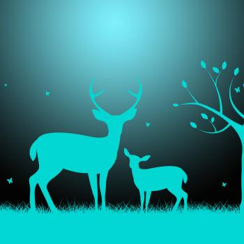 Deer Wildlife Indicates Night Time And Darkness