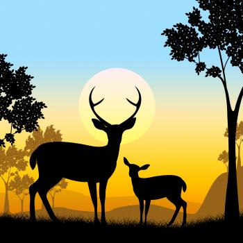 Deer Wildlife Indicates Safari Animals And Evening