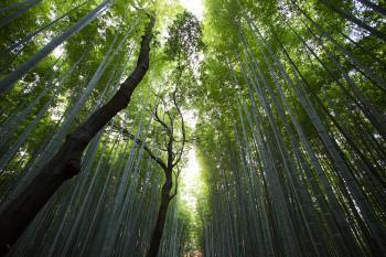 Dense Green Woods