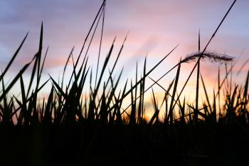 Depth of Field Photo of Grass Silhouette during Golden Hour