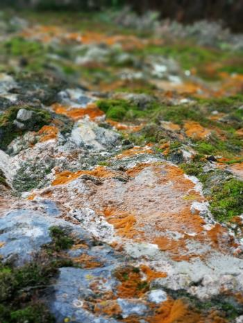 Depth of Field Photograph of Green and Brown Mosses