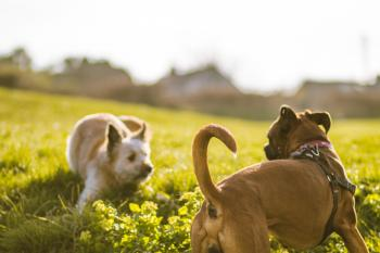 Depth of Field Photography of Brown Dog Near White Grasses