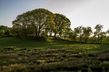 Derryboye tree ring