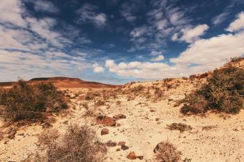 Desert Field Under Cloudy Sky
