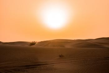 Desert Under Yellow Sunset