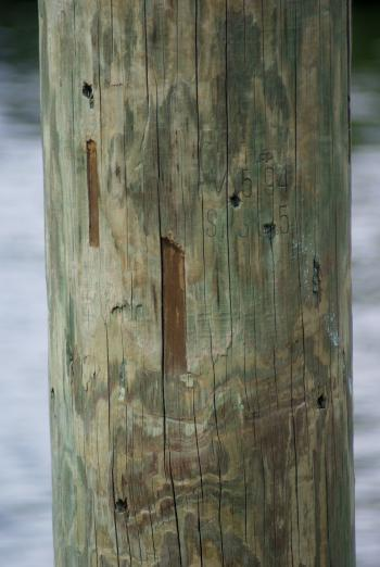 Detail of pier timber