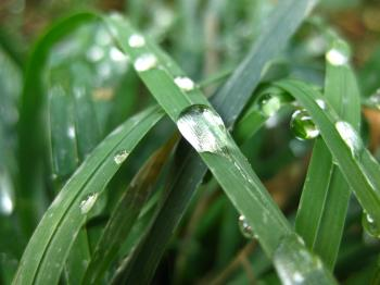 Dew on grass blade