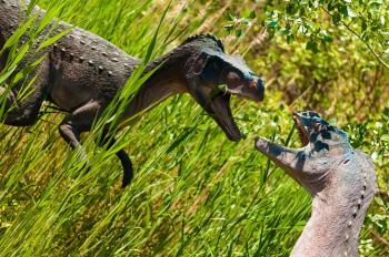 Dinosaur Fight