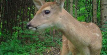 Doe A Deer A Female Deer