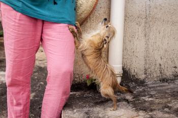 Dog Begs