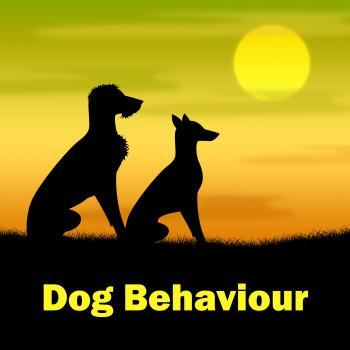 Dog Behaviour Means Actions Landscape And Pup