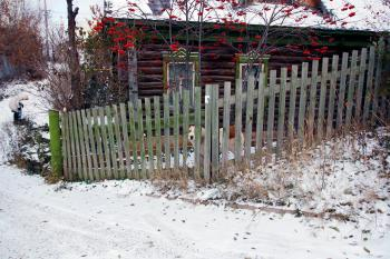 Dog, fence and old house