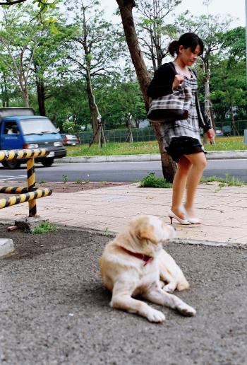 Dog Looking At Woman