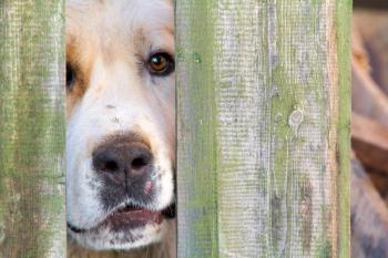 Dog looks through fence