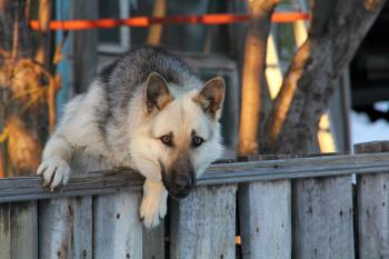 Dog on fence