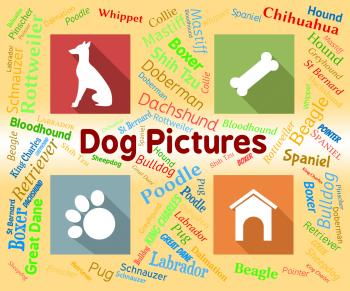Dog Pictures Means Pets Pups And Words