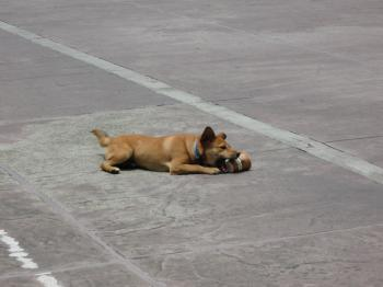 Dog Playing With Cup