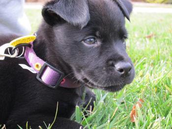 Dog - Puppy