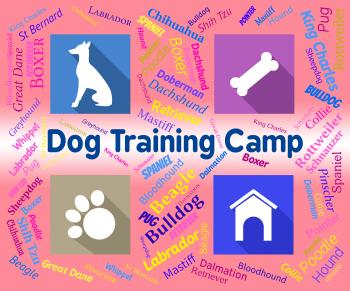 Dog Training Camp Indicates Group Trained And Coaching