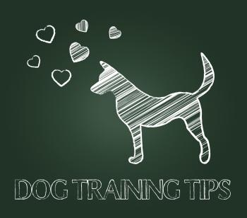 Dog Training Tips Shows Instruction Skills And Coaching