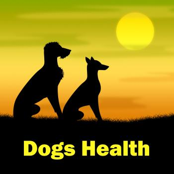 Dogs Health Shows Puppies Canines And Landscape