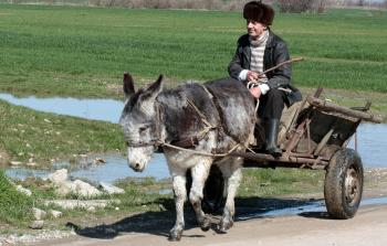 Donkey Man