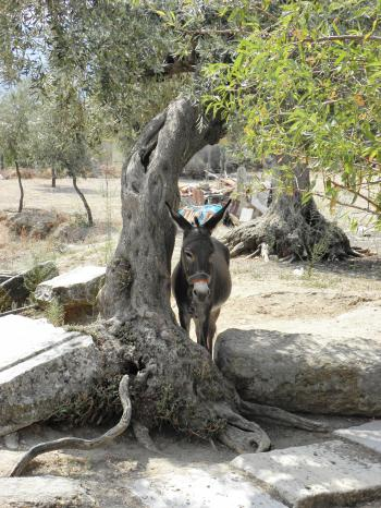 Donkey resting in shade