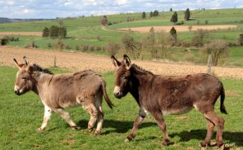 Donkeys in the Stable