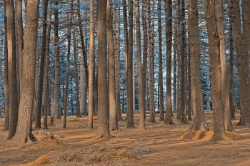 Dorwin Forest - Winter Blue HDR