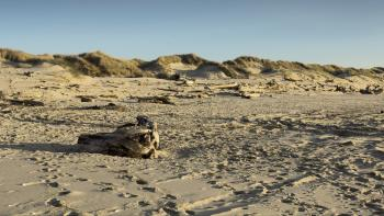 Drift wood and sand dunes, Oregon Coast