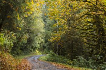 Driftcreek Wilderness, Oregon