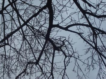 Dry tree branches
