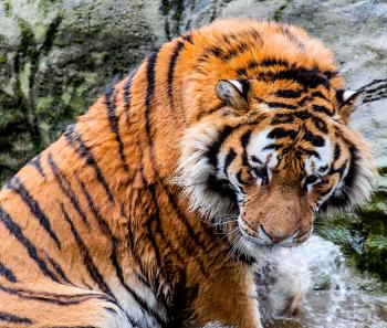 Dublin Zoo 2014