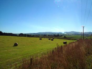 Dunedin landscape