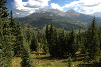 DUNTON MEADOW -11, west of, groundhog mt, at 10,300 ft pass, dolores co, co - (8-26-12) -02