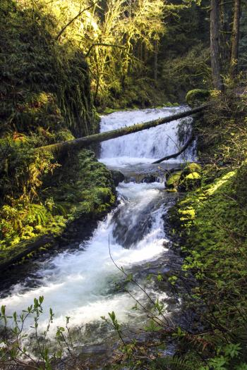 Dutchman Falls, Middle Falls, Oregon