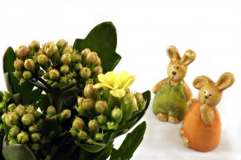 Easter rabbits looking at a flower
