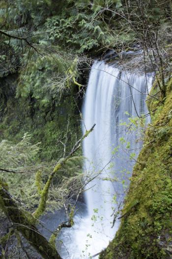 Ecola Falls, Oregon