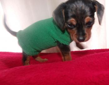 Eenie Weenie's Christmas Sweater
