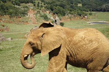 Elephant at Cabarceno ZOO, Spain