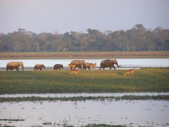 Elephants and Deer back in home at Dusk