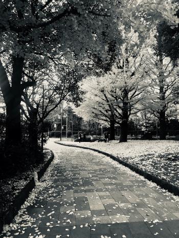 Empty Garden Pathway