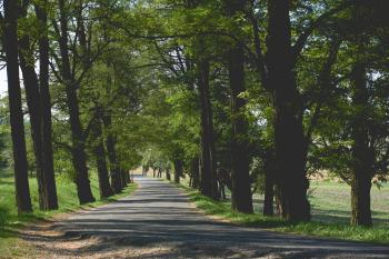 Empty Pathway Surrounded by Trees and Grass