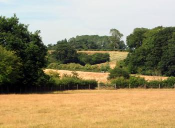 English fields and trees - Suffolk