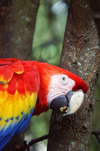 Exotic parakeet