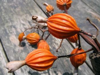 Exotic Seedpods
