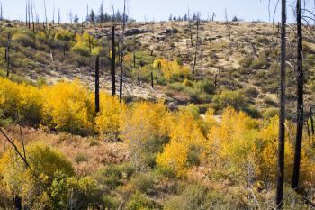 Fall color in Central Oregon