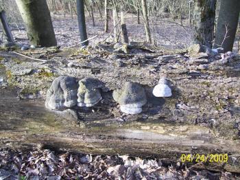 Fallen Dead Tree