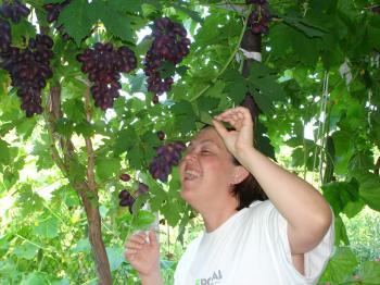 Favorite grapes
