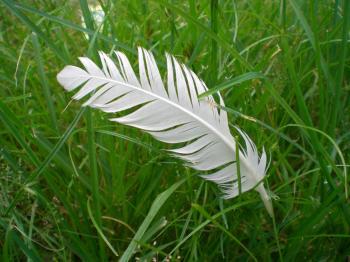 Feathergreen
